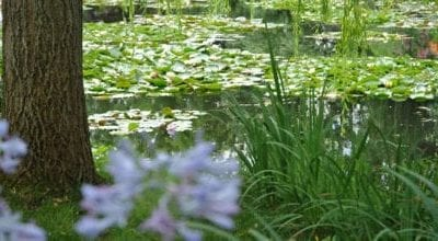 monet-giverny-tour