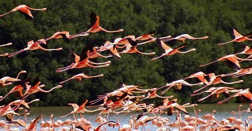 fenicotteri-rosa-camargue