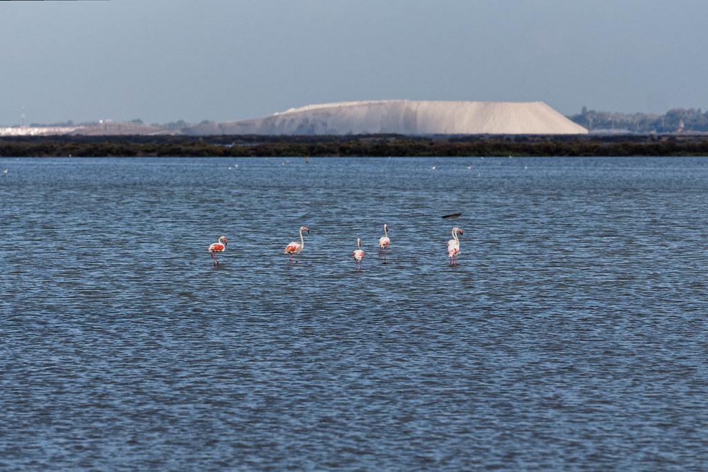 Camargue vista di fenicotteri nel fiume Rodano