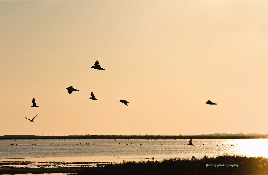 uccelli-parco-ornitologico